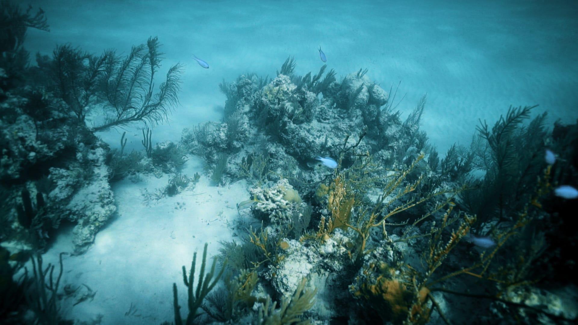 Acidificazione dell'oceano