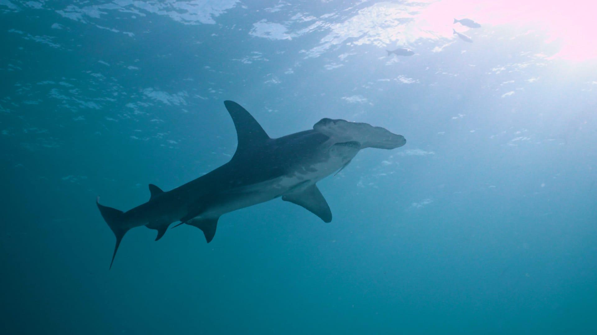 Specie marine in estinzione