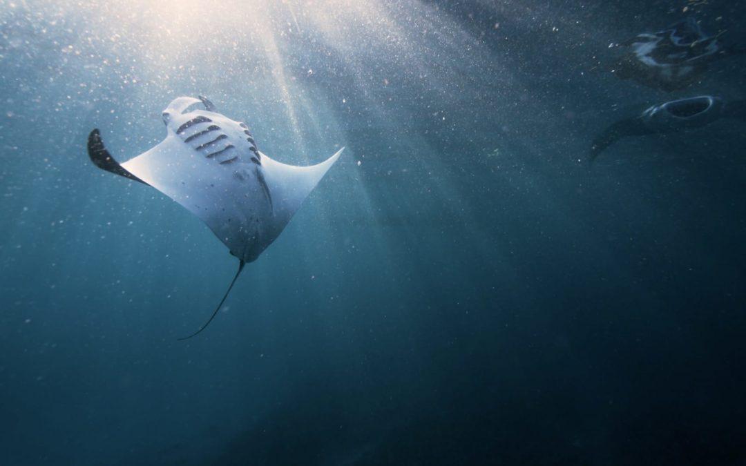Les Colibris de l'Océan
